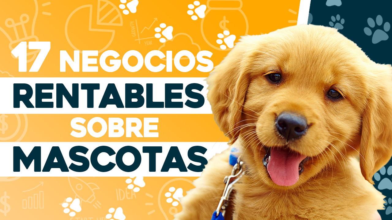 negocios rentables sobre mascotas